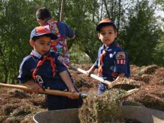 Boys in the Scout Program